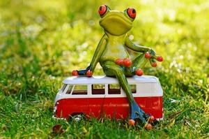 Frog 1109777 1920